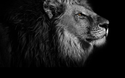 NEW MOON IN LEO : GO GENTLY INTO THE UNKNOWN